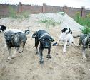 Шесть щенков в добрые руки