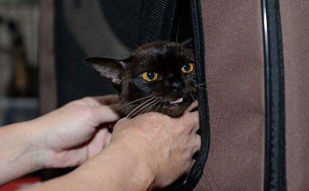 Участвуйте в фотоконкурсе милых котиков