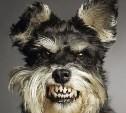 Пьяная бабка и три агрессивные собаки