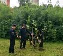 Тульские транспортники сажают деревья