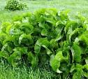 Список «опасных» садовых растений от читателей Myslo
