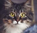 Кот Шурик ищет хозяина
