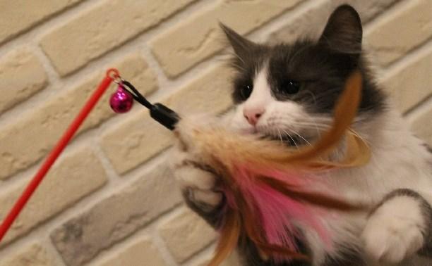 Кошечка Василиса ищет хозяина
