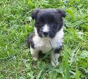 В Новомосковске пропала собака
