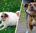 Найдены две собаки