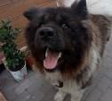 Пропала собака,живущая в нашем дворе