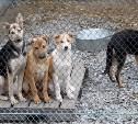 Радуйтесь! В Туле проведен аукцион по отлову животных