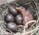 Рейдерский захват гнезда..