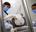 Тестирование на животных: а вы знаете, что скрывается за вашими духами или кремом?