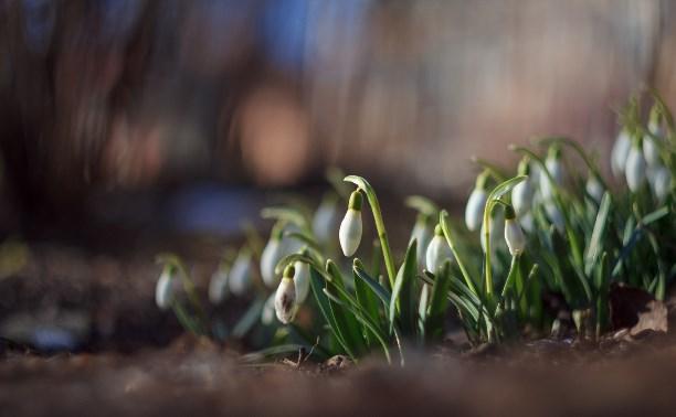 Весна - птицы прилетают, подснежники цветут