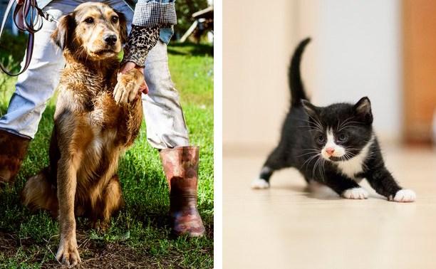 Собаки и котята ищут любимых хозяев