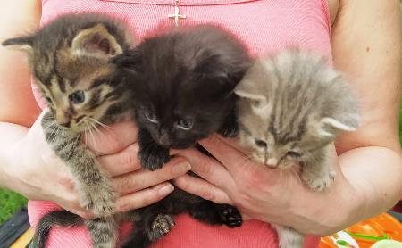 Котята родились на улице. Им нужна ваша забота