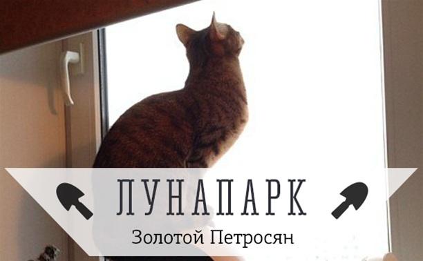 Мечтательный котэ