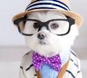 Стартовал фотоконкурс «Модный пёс»