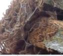 Эпидемия гусениц