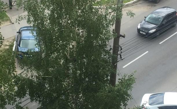 Кот уже третий день сидит на дереве