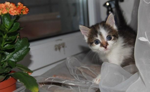 Котенок ищет заботливых родителей