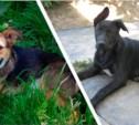 Двум собакам срочно нужны хозяева