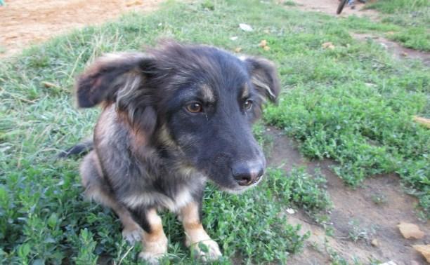 Ищет дом добрая собака, которая обожает детей