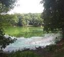 Экологическое происшествие в Платоновском парке