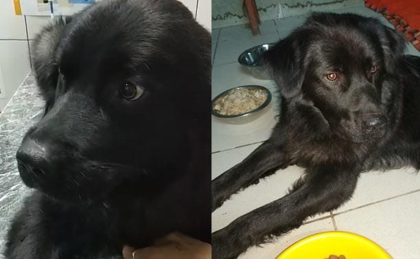 В Щёкино найден раненый пёс. Хозяева, отзовитесь!