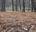 Новый лес.