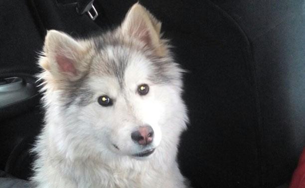 В Киреевском районе найдена собака
