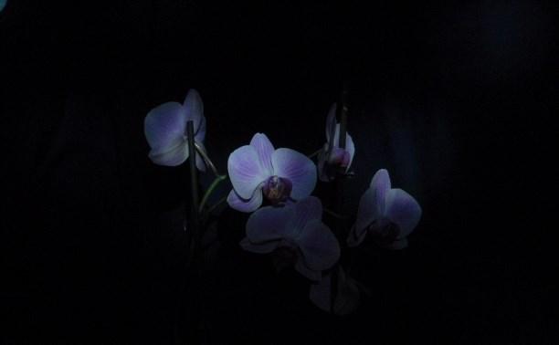 Ночные иллюзии