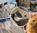 17 кошек из адской квартиры нашли дом!