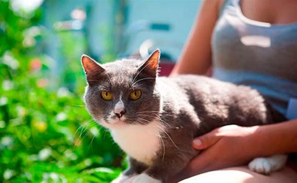 Эти кошки могут стать вашими