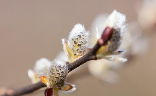 Весна крупным планом