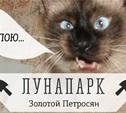 Коте в шоке