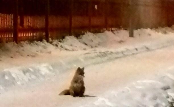 В парке лиса бегает