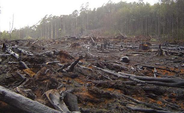 Куда жаловаться, если вырубают лес