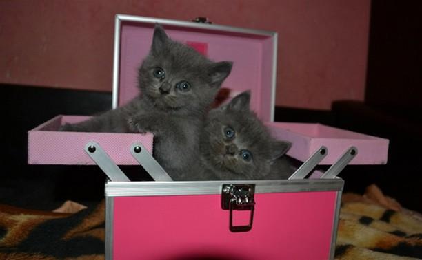 Люба Бузыкина: Одного котенка уже купили!