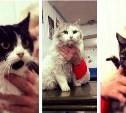 15 кошек остались без дома после пожара