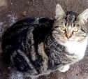 Кот замерзает на улице, ему нужен дом