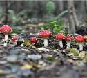 Голосуем в грибном фотоконкурсе