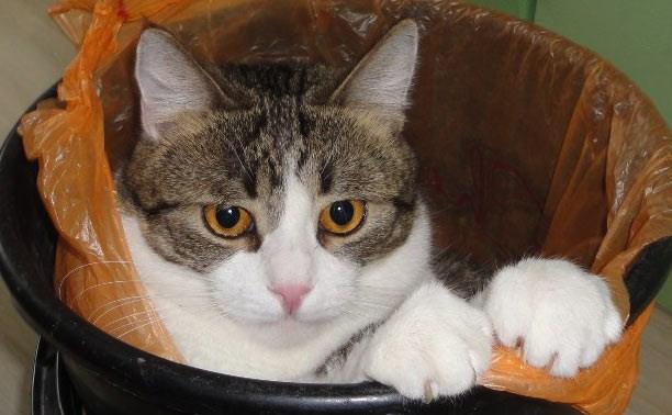 Победители фотоконкурса «Кот в мешке»