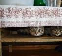 Голосуем за фото самых милых котиков