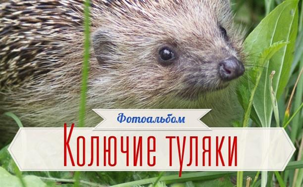 Ежиный флешмоб ;)