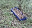Гробы в лесу