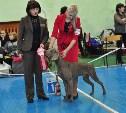 В Туле прошла выставка собак