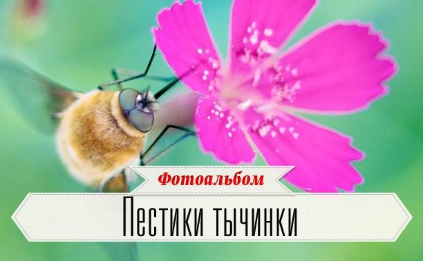 Спасибо за цветы :)