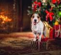 Начался фотоконкурс рыжих собак