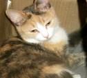 Кошка в ошейнике найдена в подъезде