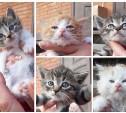 В Туле котят выбросили на дорогу. Ищем новую семью!