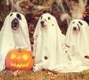 Участвуйте в фотоконкурсе «Хэллоуин парад»