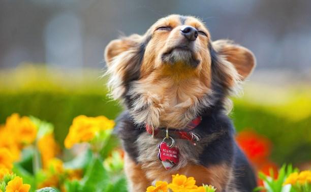 Собаки на детских площадках и дворах