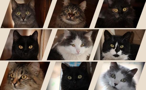 9 кошек и котов в ожидании уютного дома